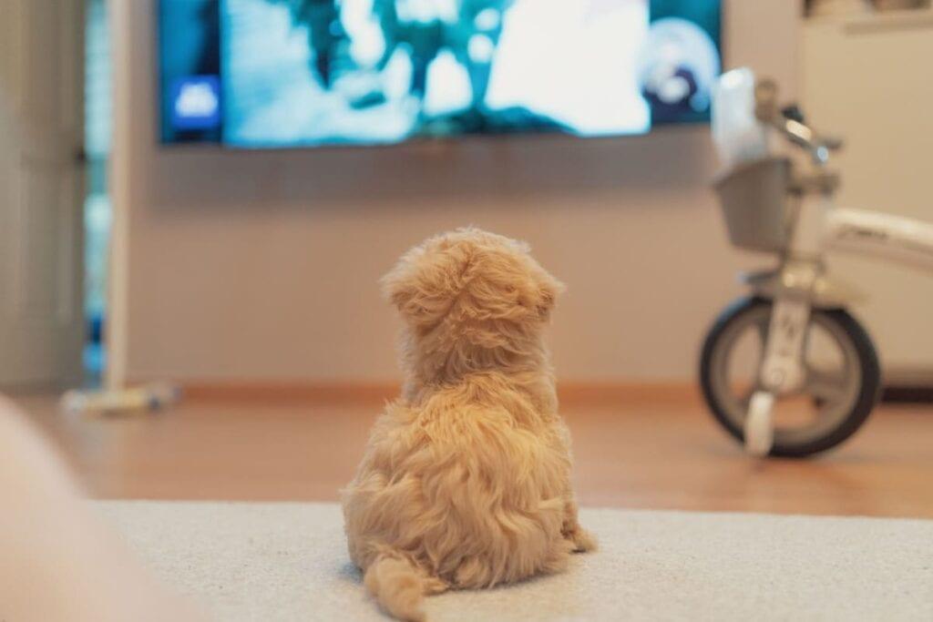 Se gode tv-programmer om hunde